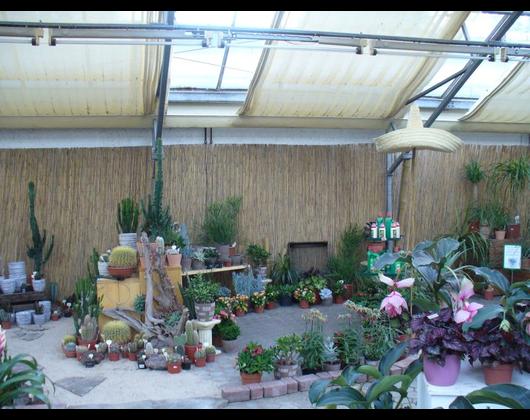 Kundenbild klein 3 Pflanzenmarkt Bohnsdorf