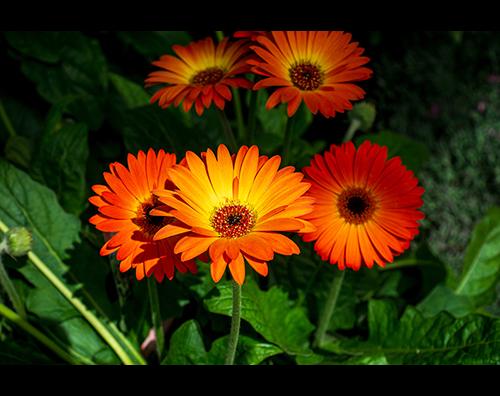 Kundenbild klein 3 Gartencenter Spiering GmbH