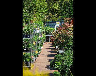Kundenbild klein 9 Gartencenter Spiering GmbH
