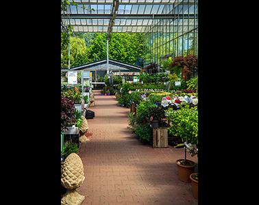 Kundenbild klein 6 Gartencenter Spiering GmbH