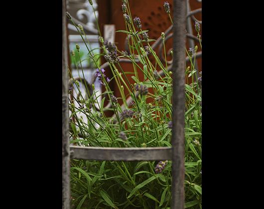 Kundenbild klein 4 Gartencenter Spiering GmbH
