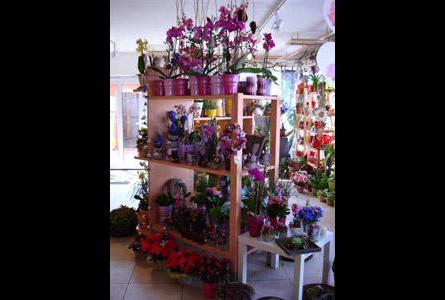 bayerl franz floristik in falkenstein im das telefonbuch finden tel 09462. Black Bedroom Furniture Sets. Home Design Ideas