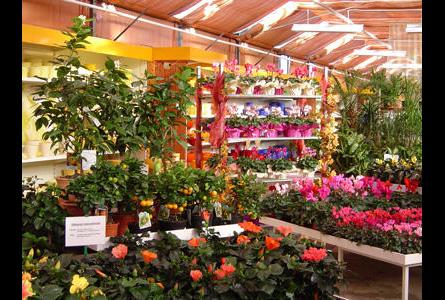 Firma In Chemnitz Pflanzen