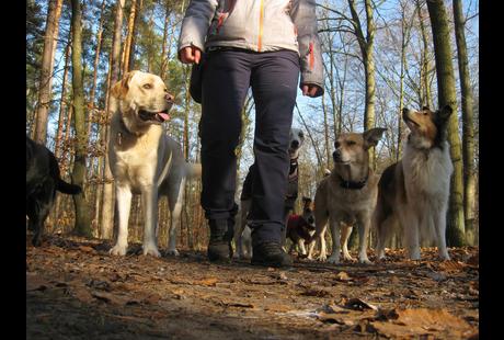 Kundenbild groß 1 4 Your Dog | Hundeausführservice | Gassiservice