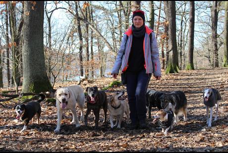 Kundenbild klein 3 4 Your Dog | Hundeausführservice | Gassiservice