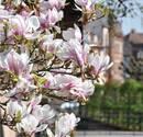 Pollenflug und Niesattacke